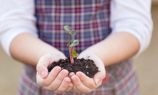 Good Soil: The Life Outcome Survey of ACCS Alumni